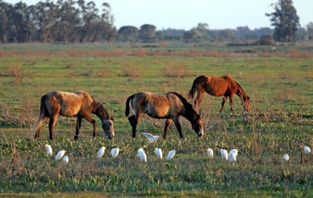 Descubre Doñana a caballo