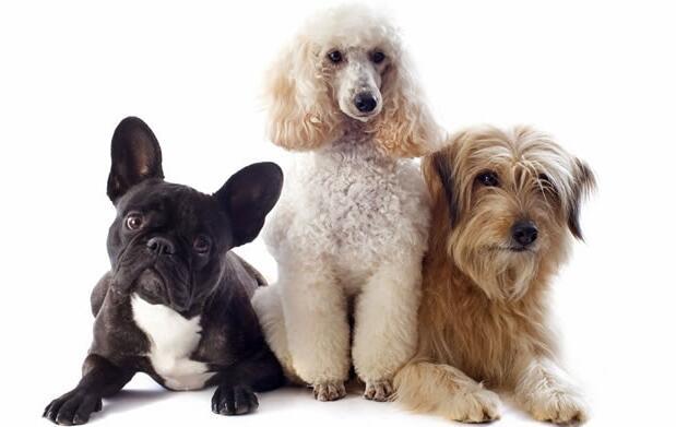Sesión de peluquería canina, ¡elige tu opción!
