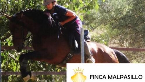 Ruta a caballo o clase de equitación