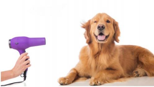 Peluquería canina: lavado y corte